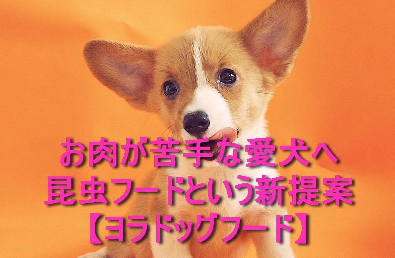 お肉が苦手な愛犬へ昆虫フードという新提案【ヨラドッグフード】